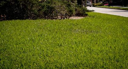 Georgia Lawns